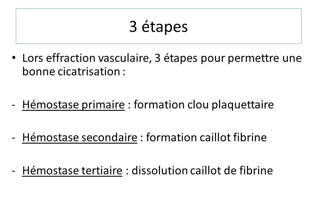 3 étapes Lors effraction vasculaire, 3 étapes pour permettre une bonne cicatrisation : Hémostase primaire : formation clou plaquettaire.