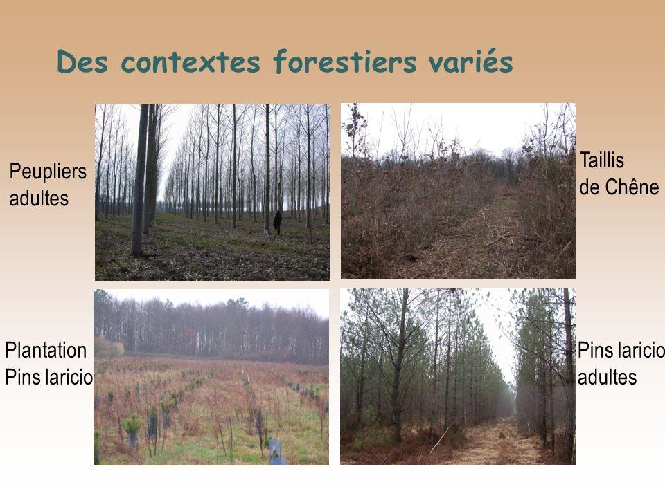 Des contextes forestiers variés
