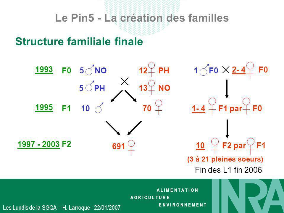 Le Pin5 - La création des familles