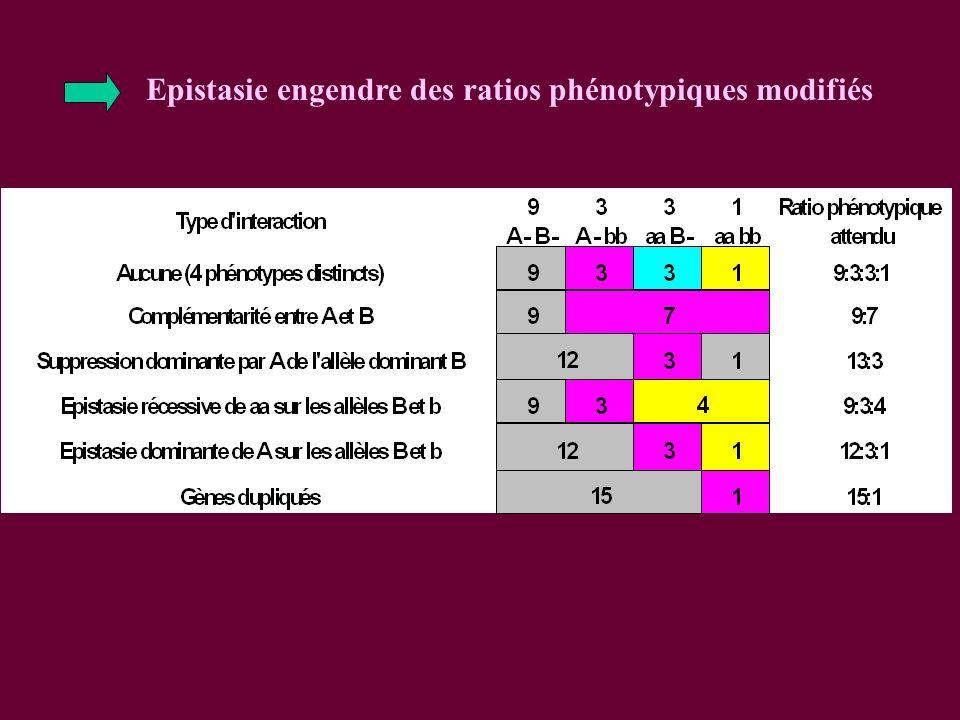 Epistasie engendre des ratios phénotypiques modifiés