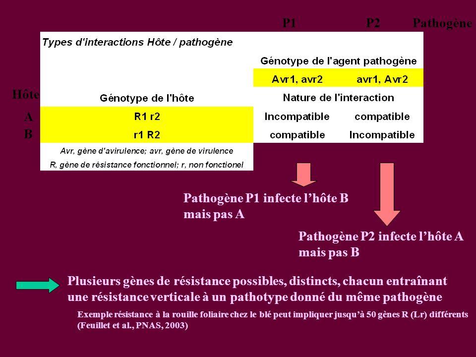 Pathogène P1 infecte l'hôte B mais pas A