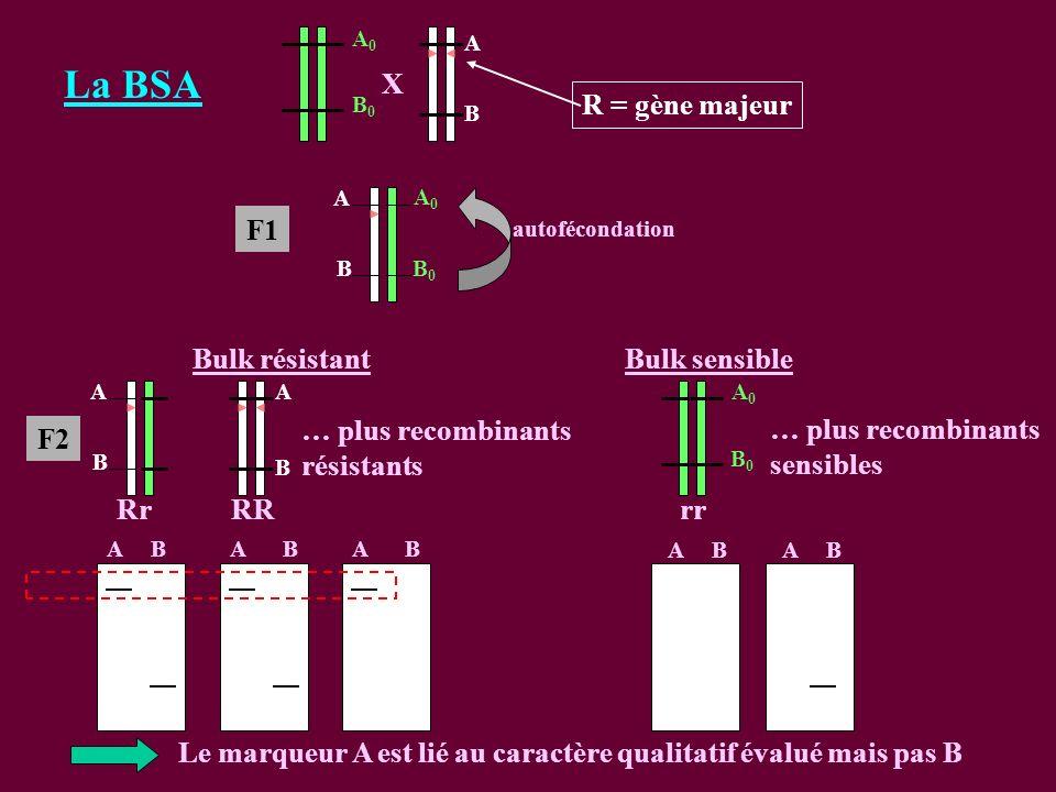 La BSA R = gène majeur X F1 … plus recombinants sensibles RR