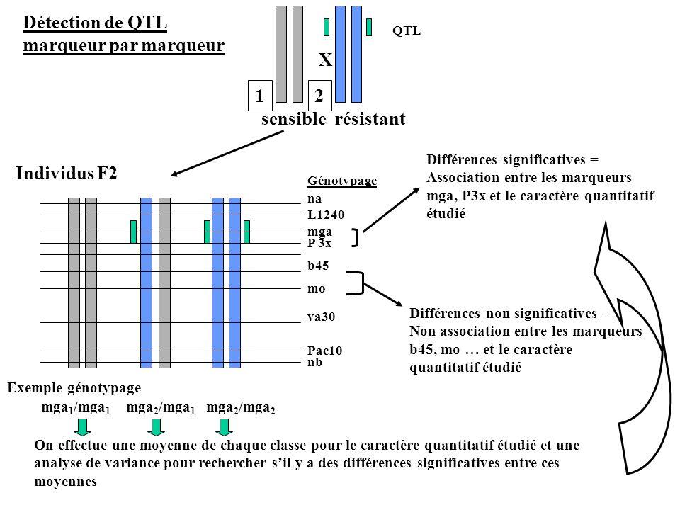 Détection de QTL marqueur par marqueur