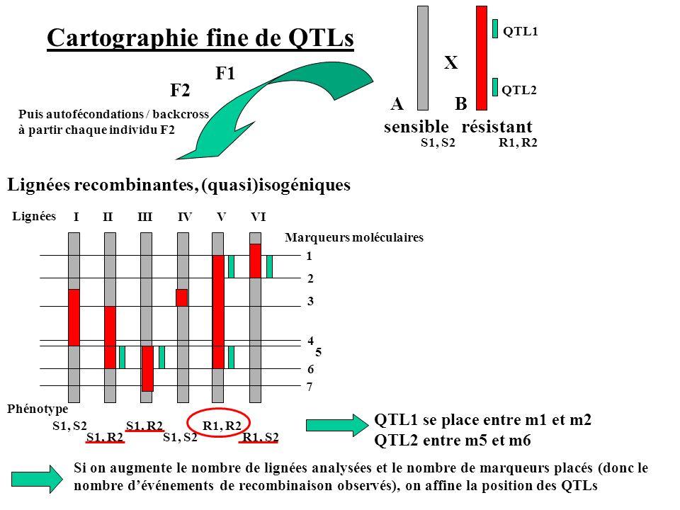 Cartographie fine de QTLs