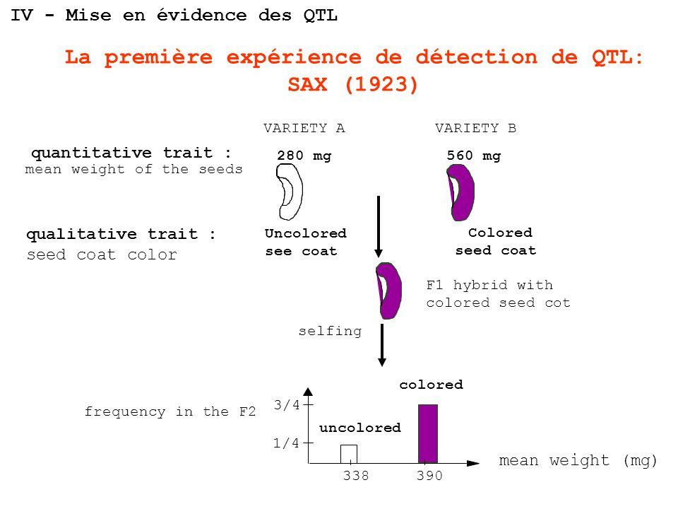 La première expérience de détection de QTL: SAX (1923)