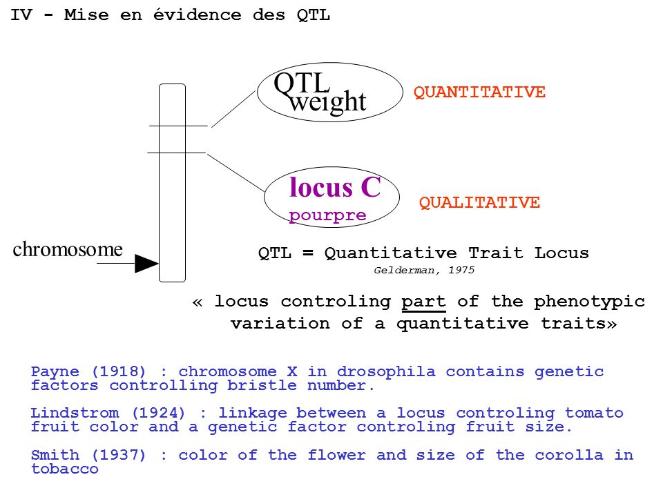 QTL weight locus C chromosome IV - Mise en évidence des QTL