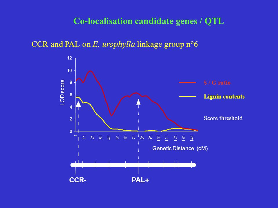 Co-localisation candidate genes / QTL