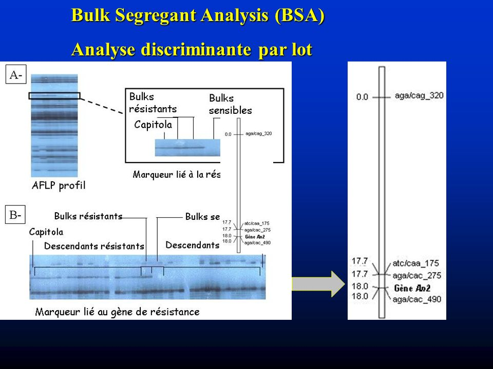 Bulk Segregant Analysis (BSA)