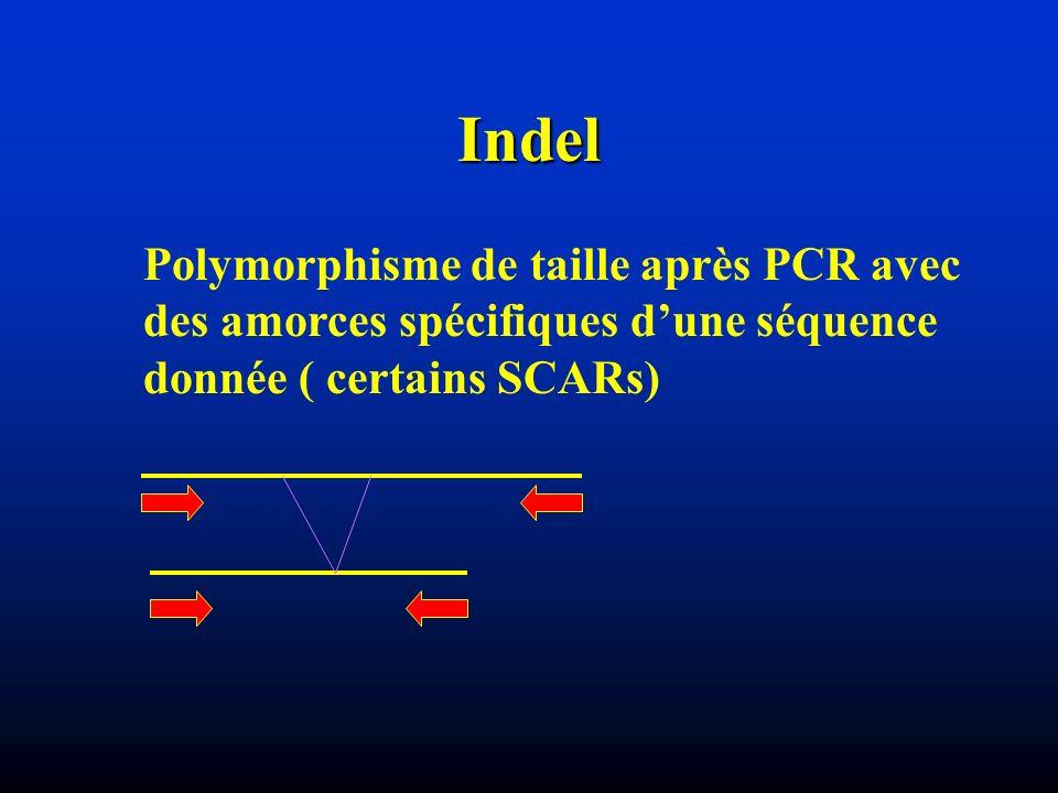 Indel Polymorphisme de taille après PCR avec des amorces spécifiques d'une séquence donnée ( certains SCARs)