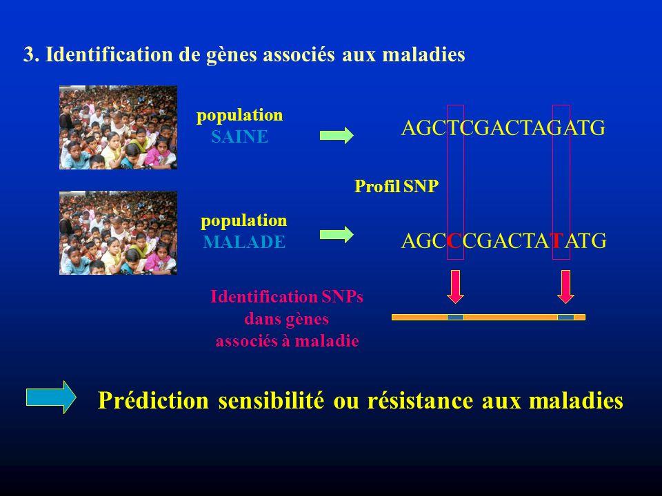 Identification SNPs dans gènes associés à maladie