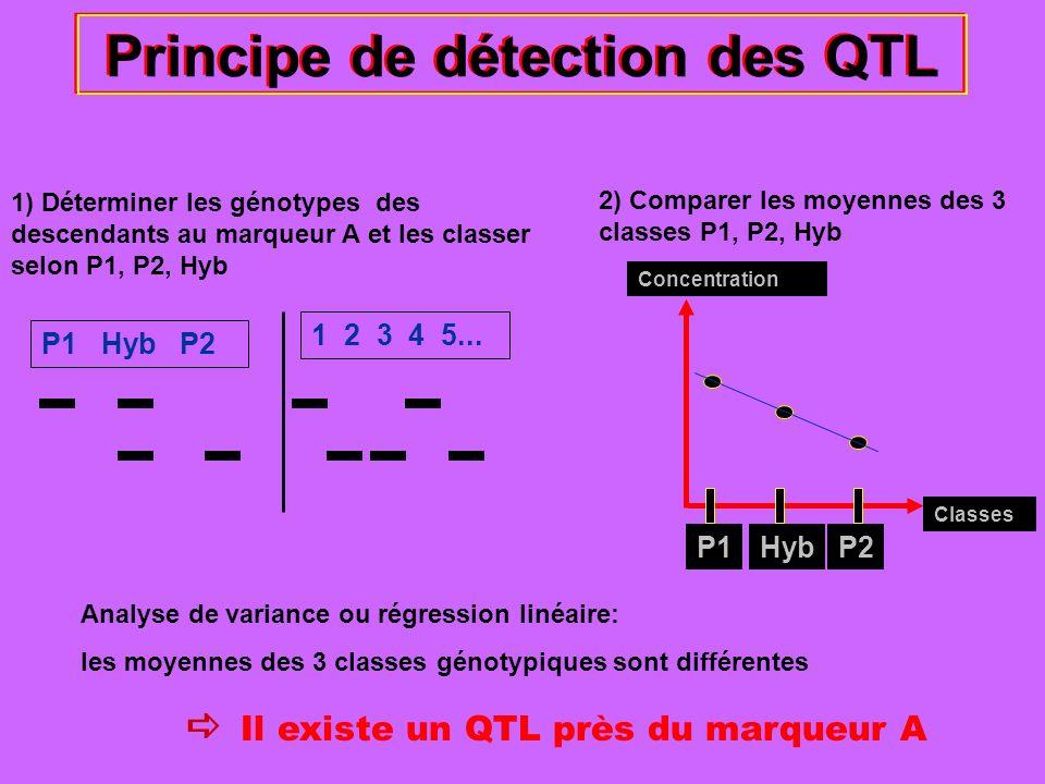 Principe de détection des QTL