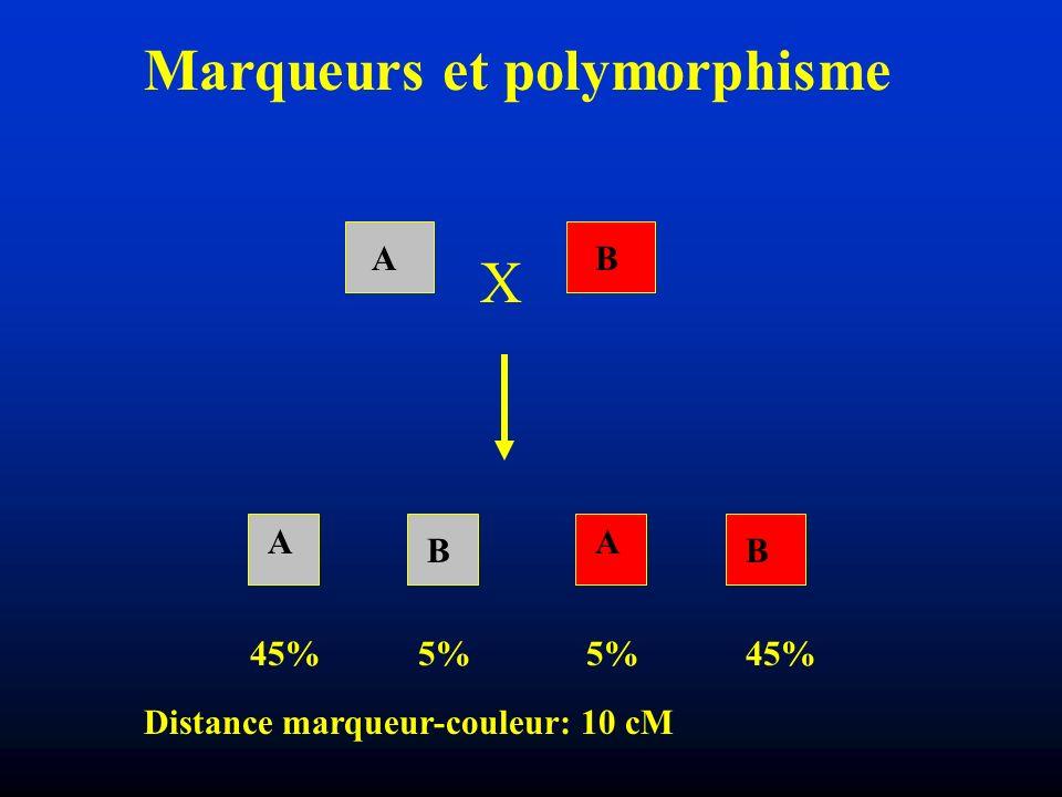 Marqueurs et polymorphisme
