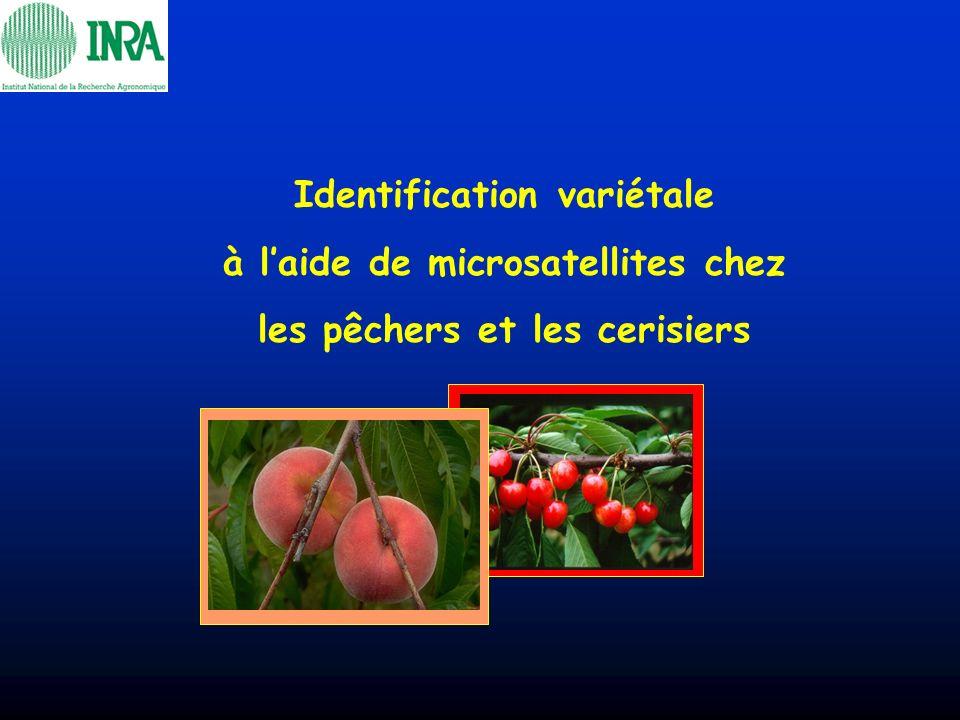 Identification variétale à l'aide de microsatellites chez