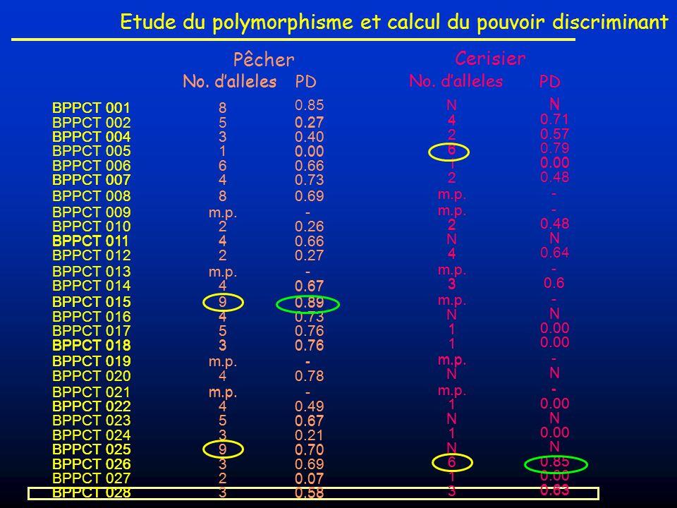 Etude du polymorphisme et calcul du pouvoir discriminant