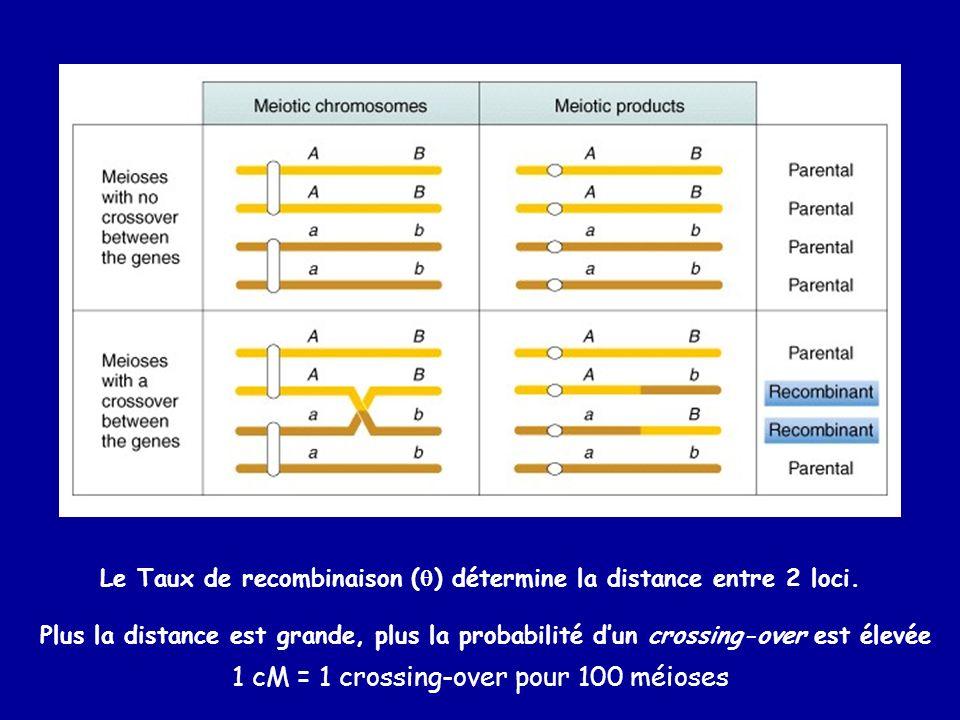 Le Taux de recombinaison () détermine la distance entre 2 loci.