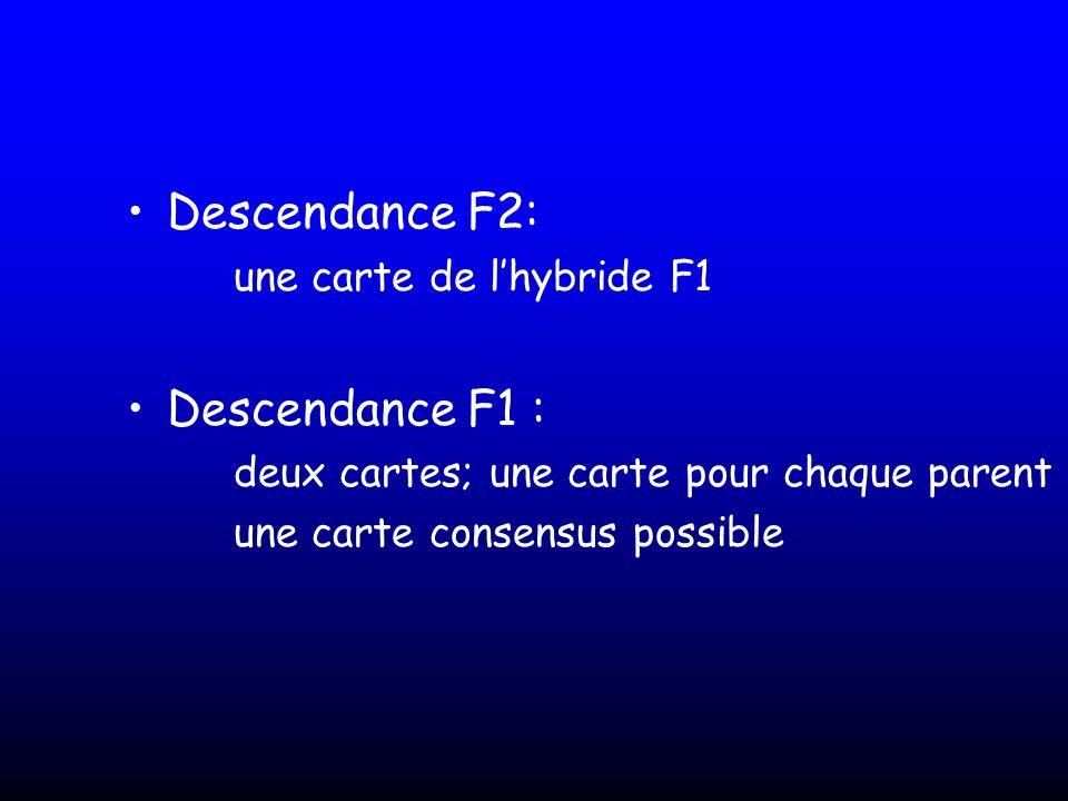 Descendance F2: Descendance F1 : une carte de l'hybride F1