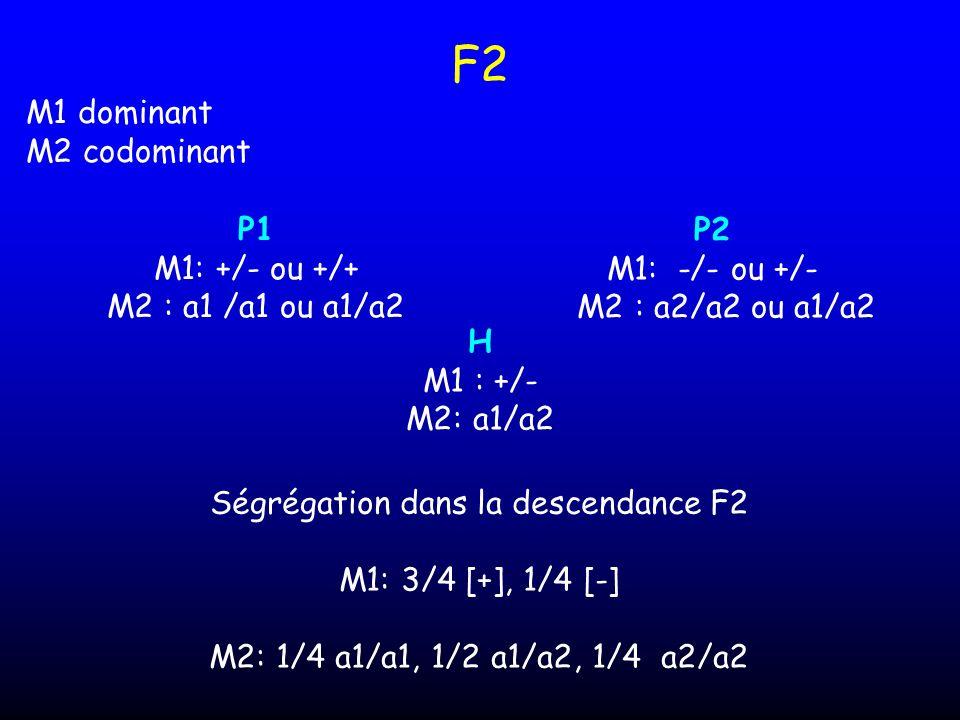 Ségrégation dans la descendance F2