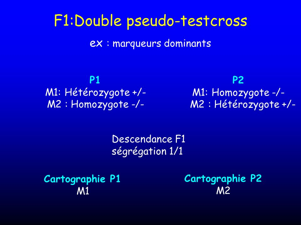 F1:Double pseudo-testcross ex : marqueurs dominants