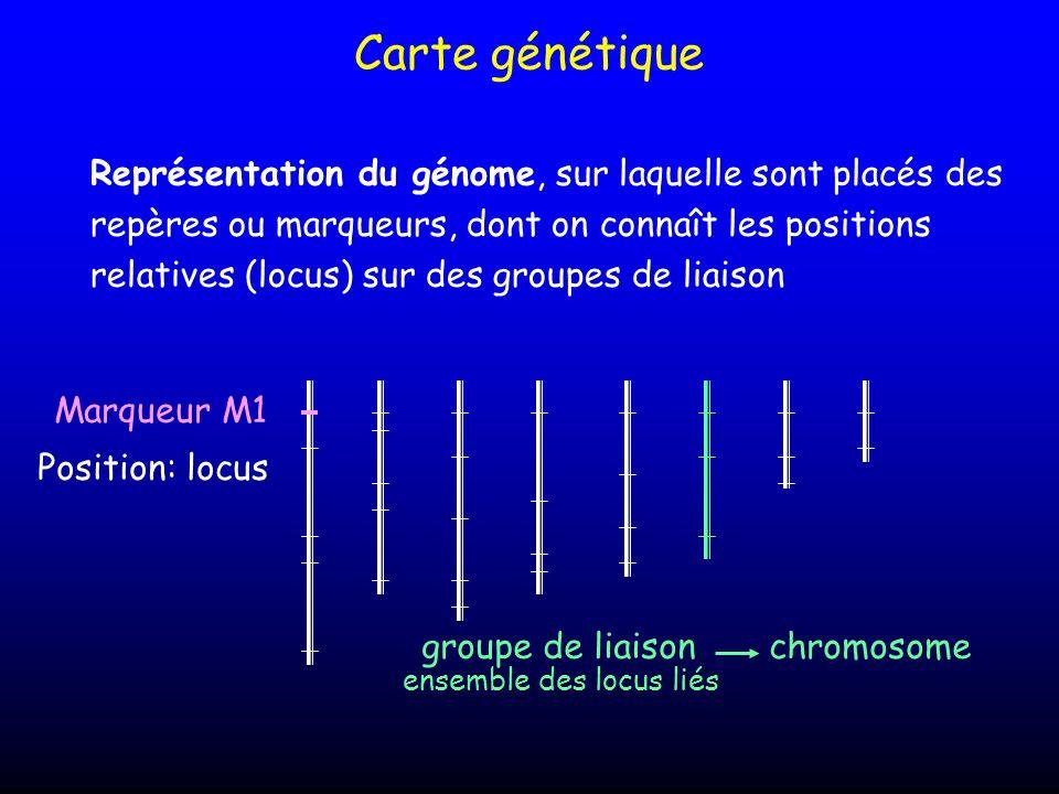 Carte génétique