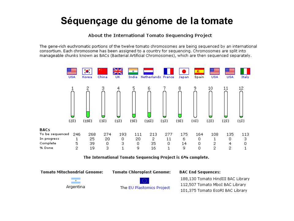 Séquençage du génome de la tomate