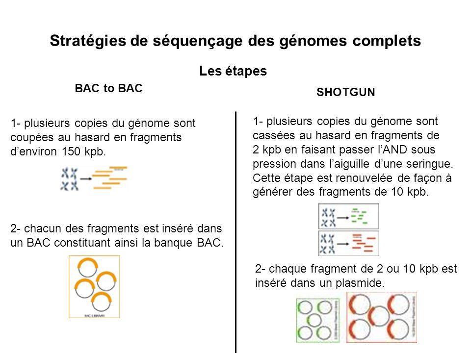 Stratégies de séquençage des génomes complets
