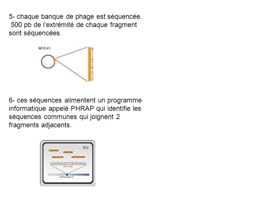 5- chaque banque de phage est séquencée.