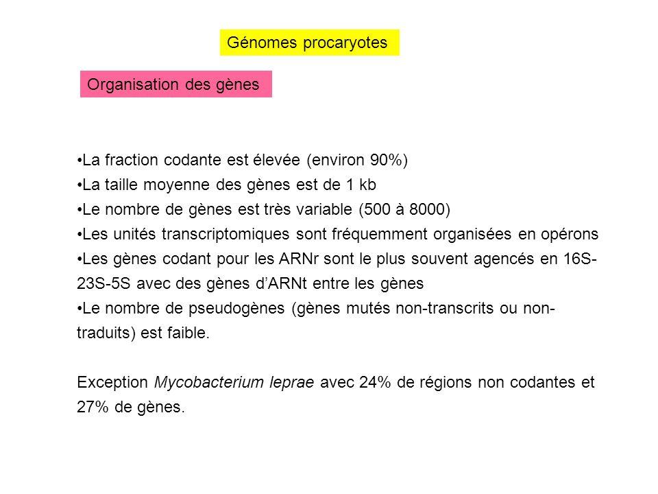 Génomes procaryotes Organisation des gènes. La fraction codante est élevée (environ 90%) La taille moyenne des gènes est de 1 kb.