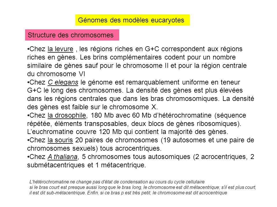 Génomes des modèles eucaryotes