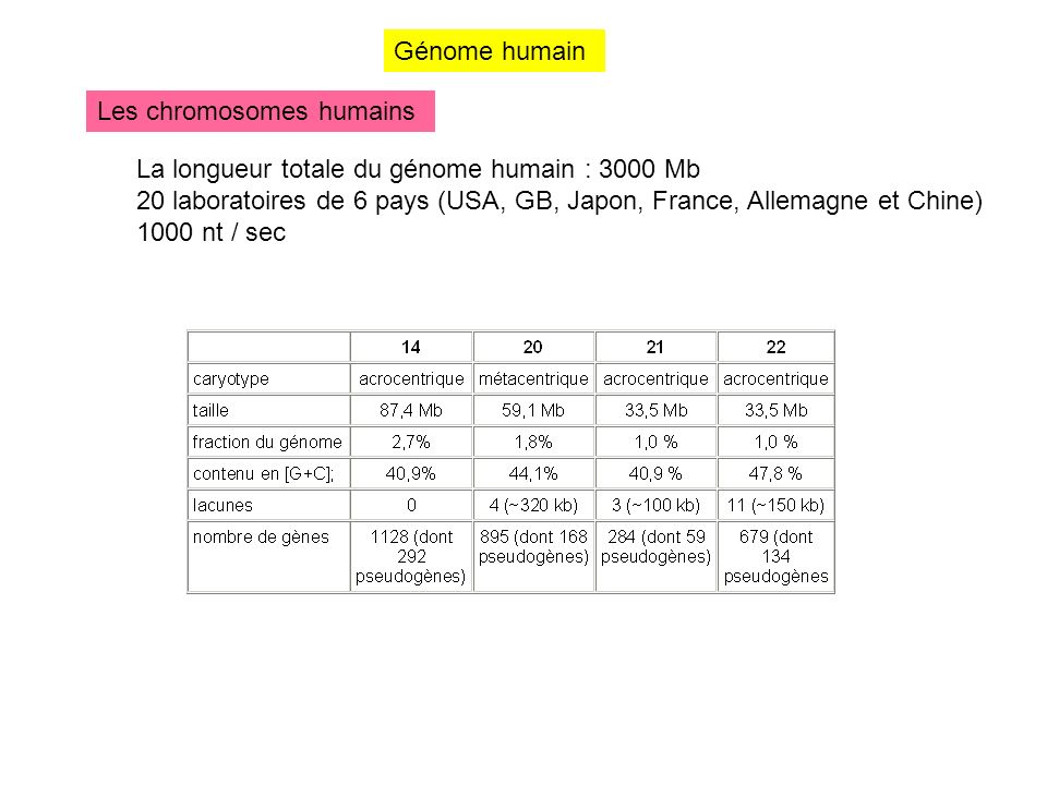 Génome humain Les chromosomes humains. La longueur totale du génome humain : 3000 Mb.