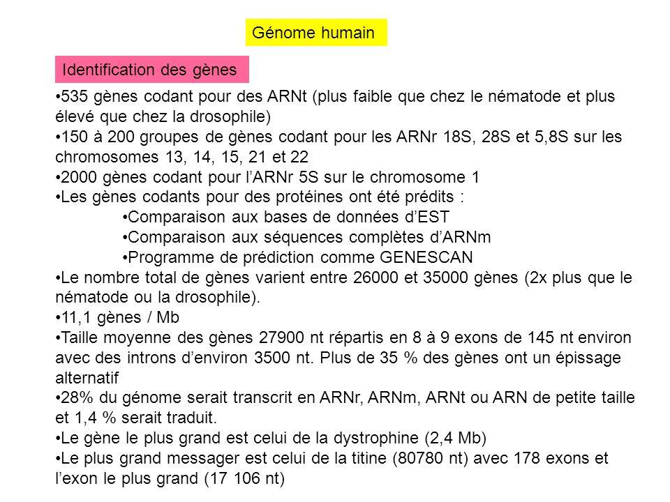 Génome humain Identification des gènes. 535 gènes codant pour des ARNt (plus faible que chez le nématode et plus élevé que chez la drosophile)