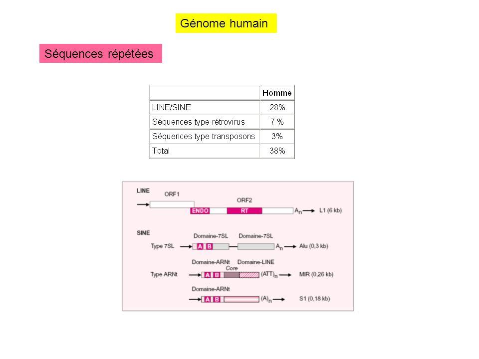 Génome humain Séquences répétées