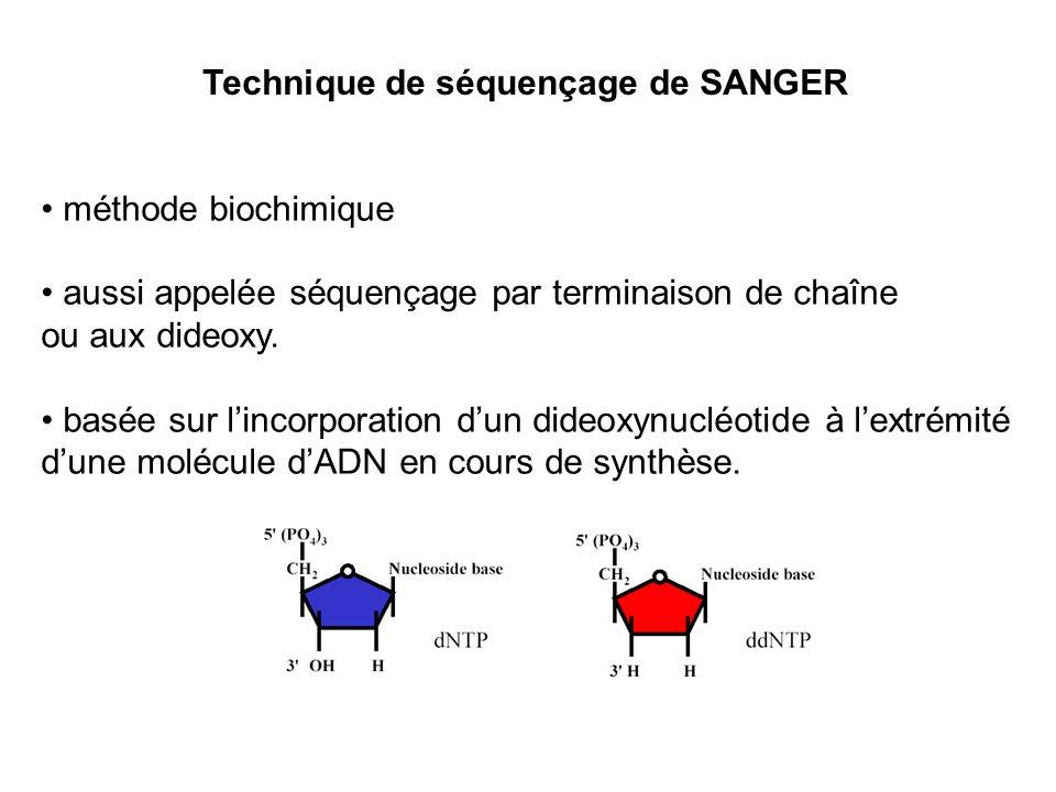 méthode biochimique aussi appelée séquençage par terminaison de chaîne. ou aux dideoxy.