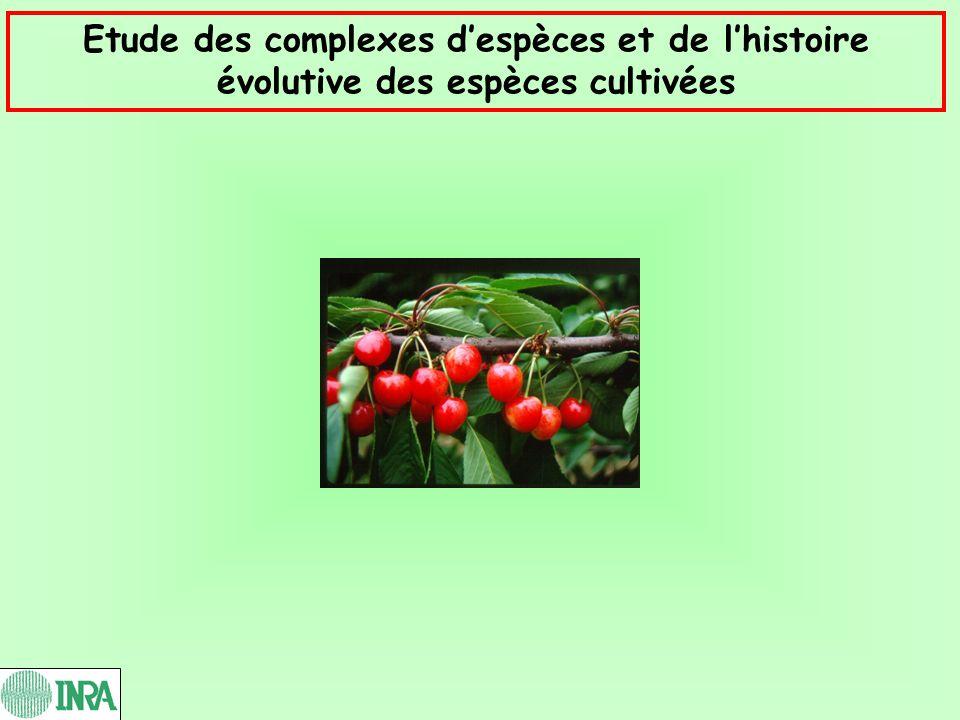 Etude des complexes d'espèces et de l'histoire évolutive des espèces cultivées