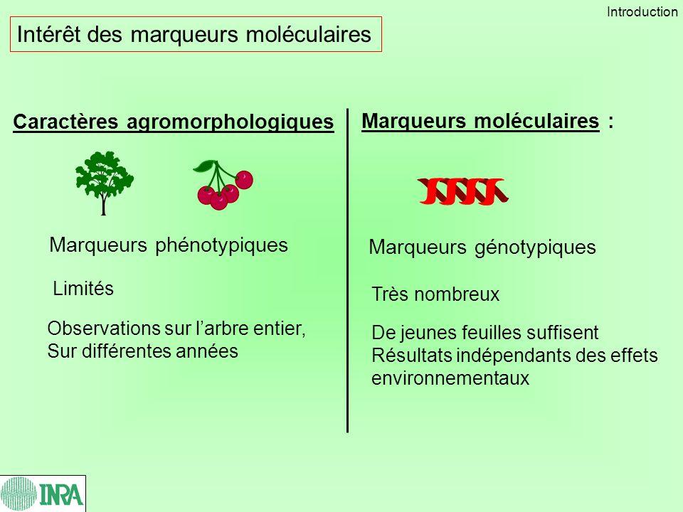 Intérêt des marqueurs moléculaires