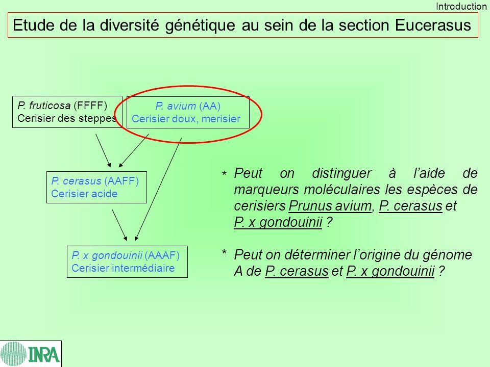 Etude de la diversité génétique au sein de la section Eucerasus