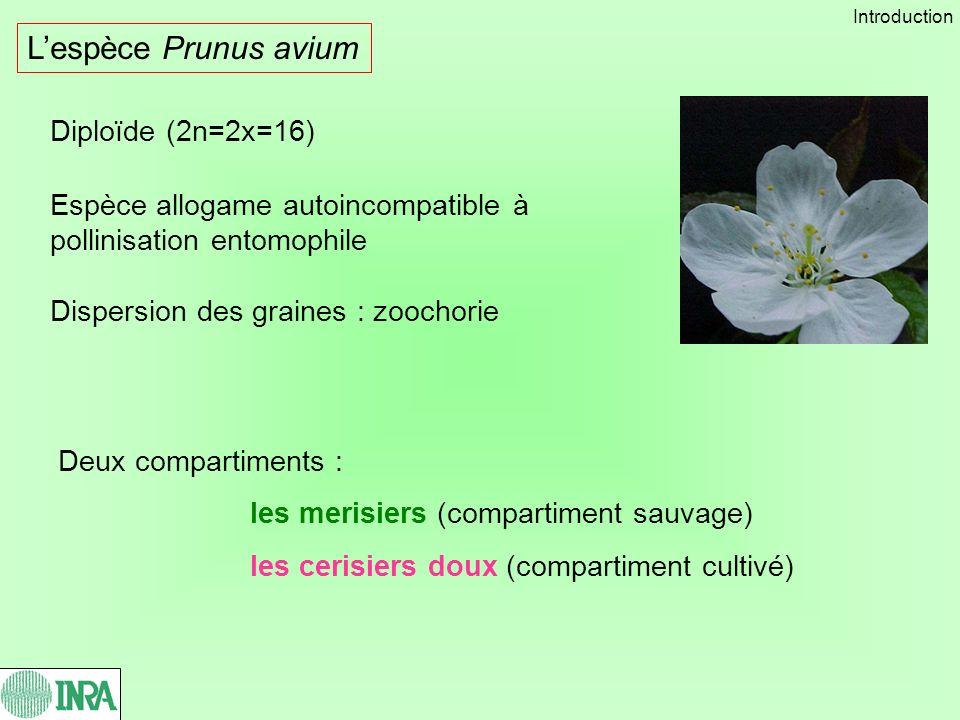 L'espèce Prunus avium Diploïde (2n=2x=16)