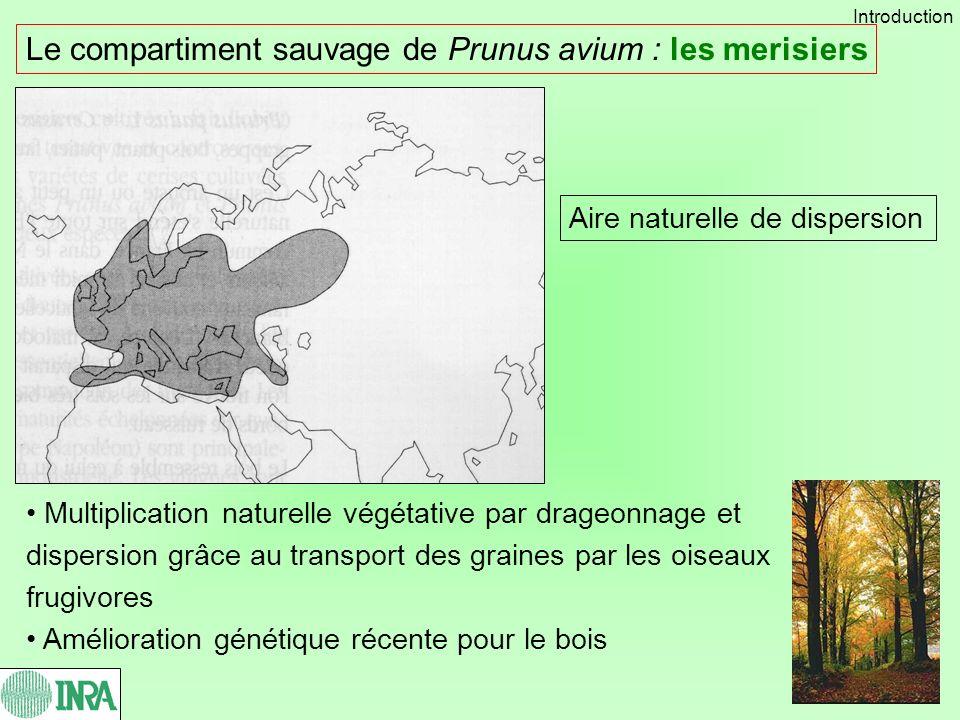 Le compartiment sauvage de Prunus avium : les merisiers