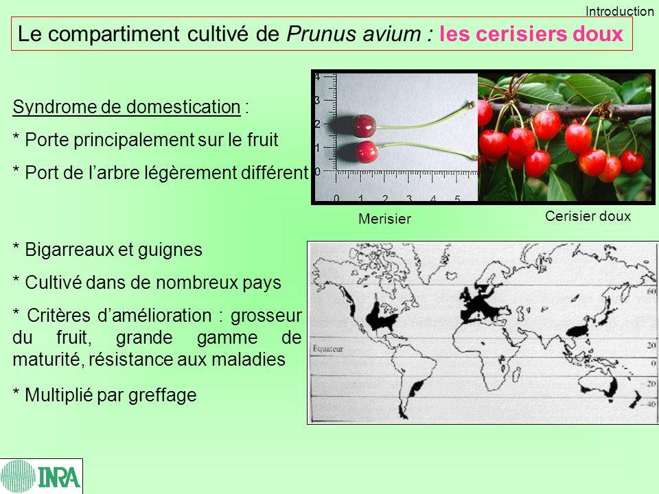 Le compartiment cultivé de Prunus avium : les cerisiers doux