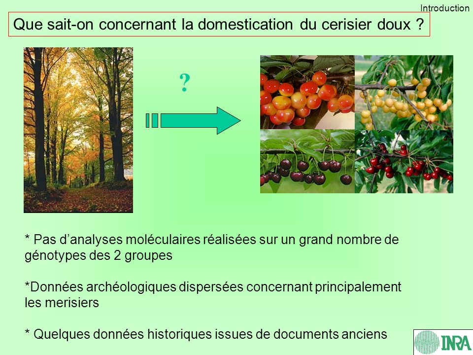 Que sait-on concernant la domestication du cerisier doux