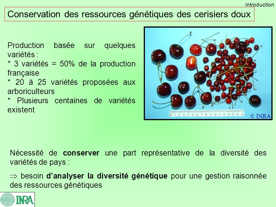 Conservation des ressources génétiques des cerisiers doux