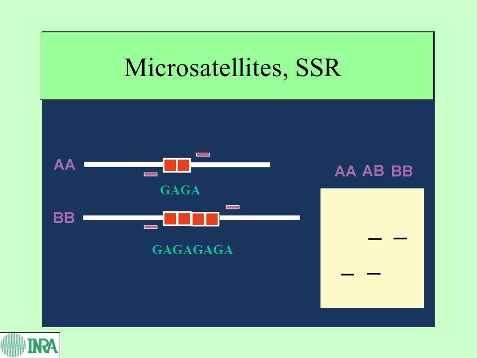 Microsatellites, SSR GAGA GAGAGAGA
