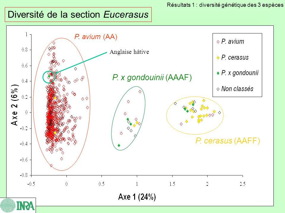 Diversité de la section Eucerasus