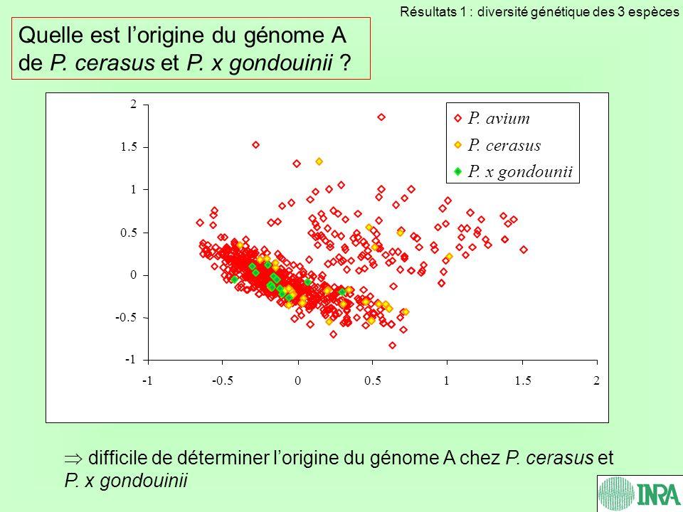 Quelle est l'origine du génome A de P. cerasus et P. x gondouinii
