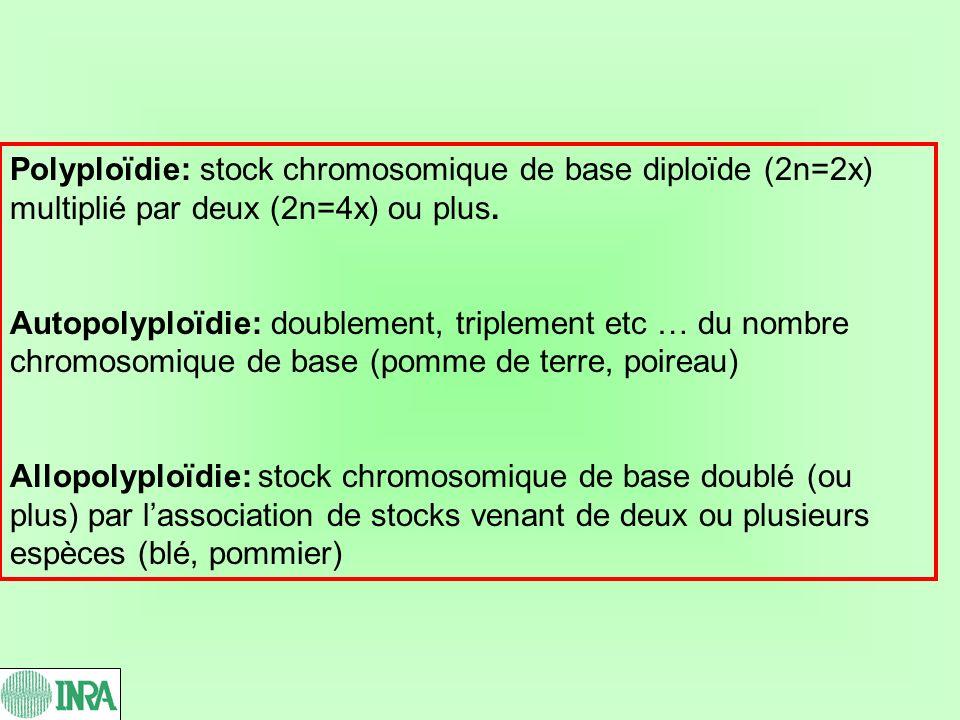 Polyploïdie: stock chromosomique de base diploïde (2n=2x) multiplié par deux (2n=4x) ou plus.