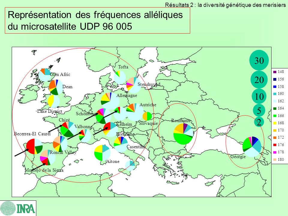 Représentation des fréquences alléliques du microsatellite UDP 96 005