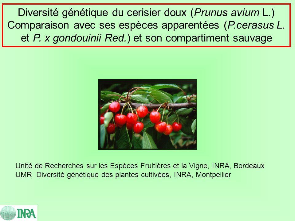 Diversité génétique du cerisier doux (Prunus avium L