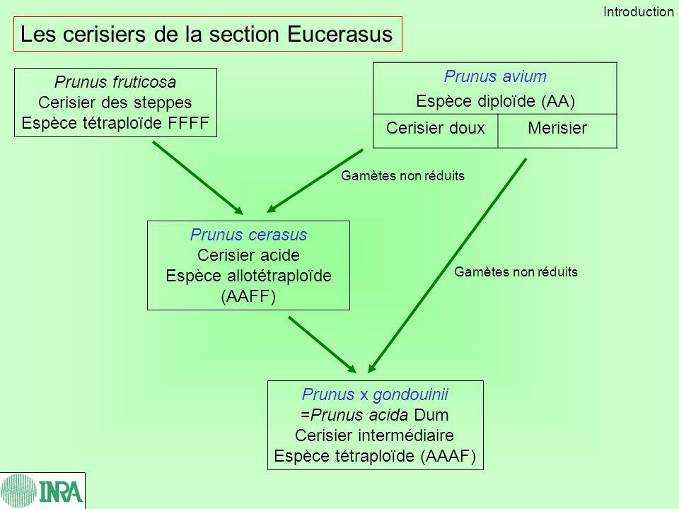 Les cerisiers de la section Eucerasus
