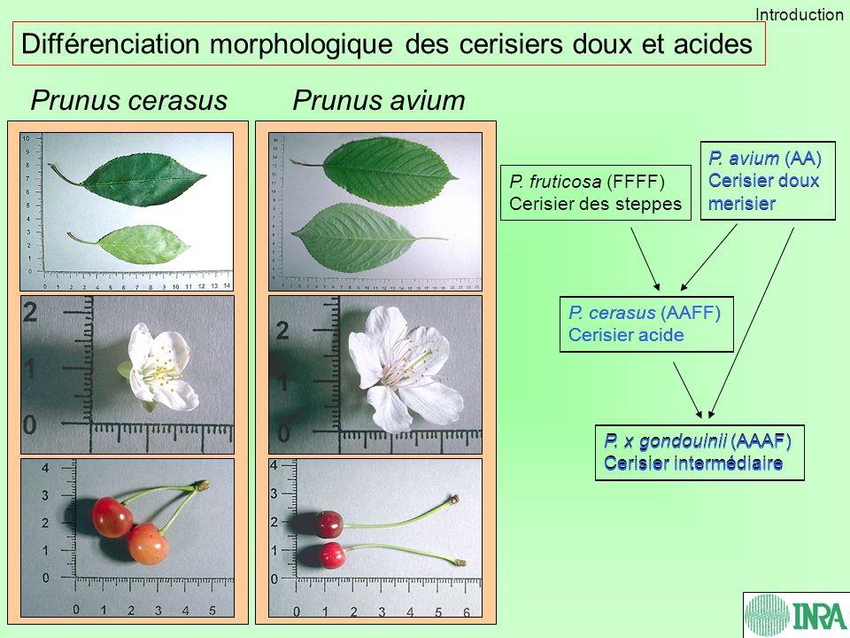 Différenciation morphologique des cerisiers doux et acides