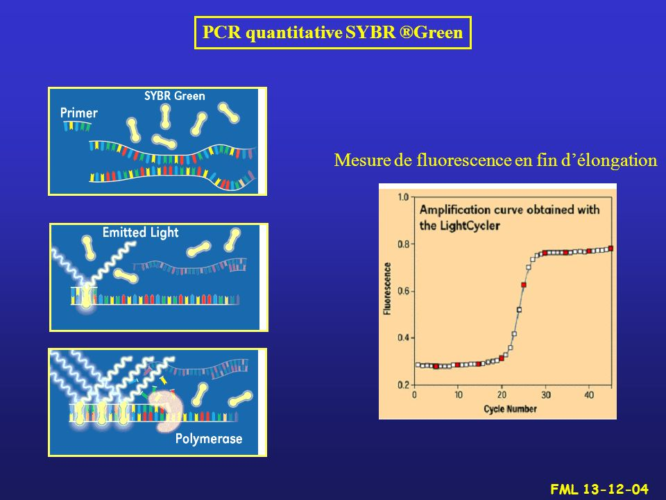 PCR quantitative SYBR ®Green