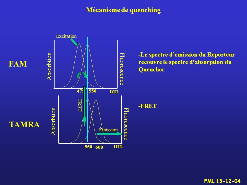FAM TAMRA Mécanisme de quenching nm nm